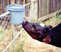 MILK BAR? 1 - single teat, rail mounted feeder is revolutionizing calf feeding in many countries.