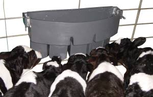 MILK BAR? 5 Compartment - The ideal feeder for farmers feeding concentrated milk formulas to use for the first 2 weeks. Feeds five calves.